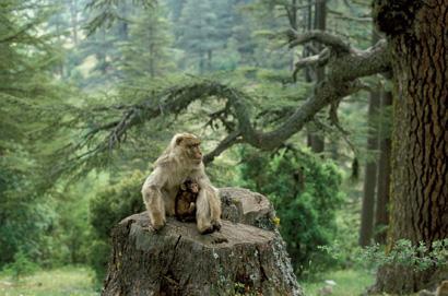 Montagne des singes à Kintzheim